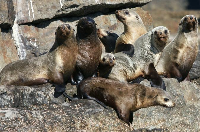 Jervis Bay Seal and Seacliffs Cruise
