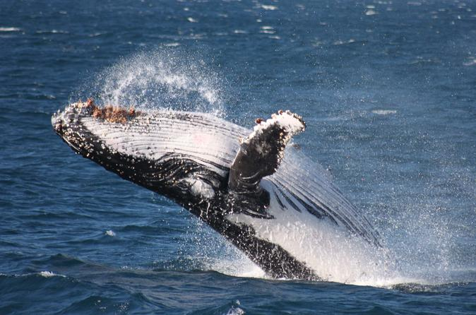 Whale watching jervis bay in huskisson 285110