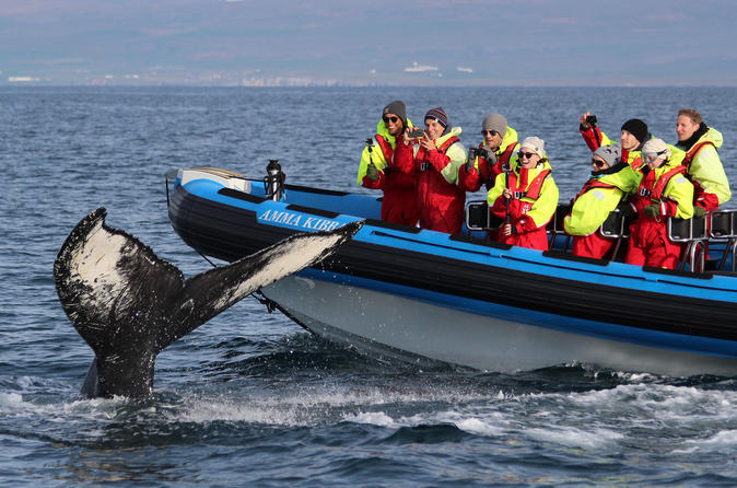 North Iceland Cruises, Sailing & Water Tours