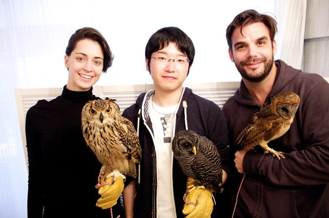 Owl cafe experience in akihabara in chiyoda 259066