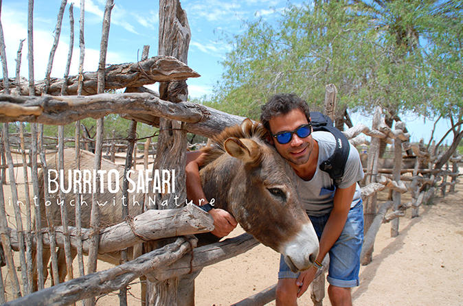 Hiking Tour in the Baja Peninsula with a Donkey