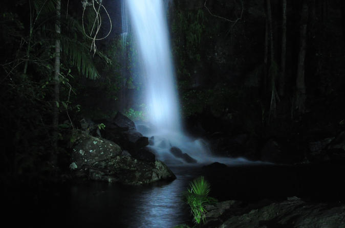 Mt tamborine national park 4wd nocturnal rainforest and glow worm tour in gold coast 138455