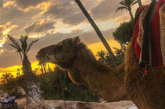 Passeio de camelo ao pôr do sol no palmeiral de Marraquexe