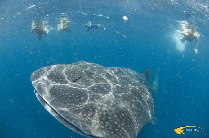 Playa Del Carmen Whale Shark Snorkeling Safari in Isla Contoy with Lunch Mexico, North America