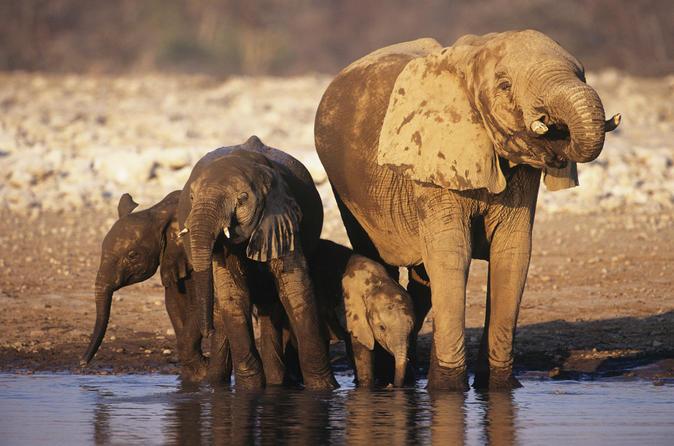 4 day namibia etosha safari from windhoek or swakopmund in windhoek 159975