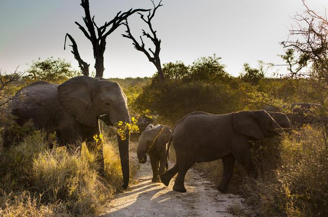 Big Five Afternoon Game Drive in Kruger National Park