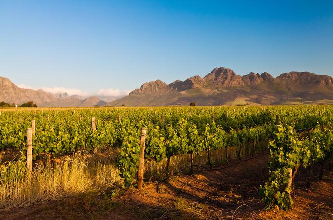 Excursão vinícola em Stellenbosch saindo da Cidade do Cabo