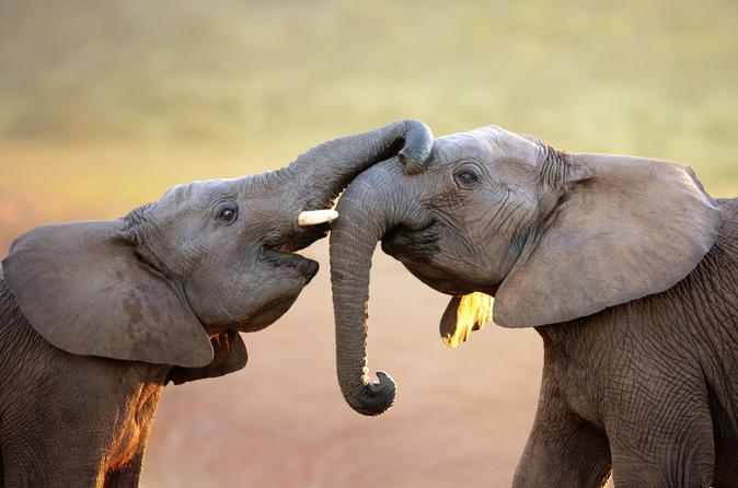 Port Elizabeth Shore Excursion: Addo Elephant National Park Tour