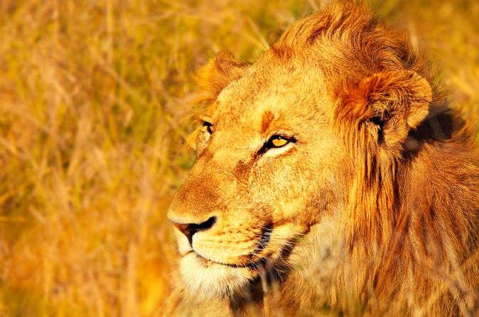 Safári de 4 dias pelo Parque Nacional de Kruger de Joanesburgo: passeios de observação e caminhadas ao ar livre