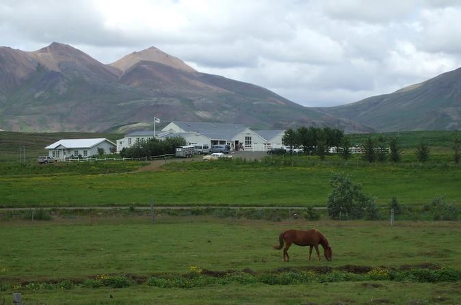 Icelandic horse riding experience from reykjavik in reykjavik 263739