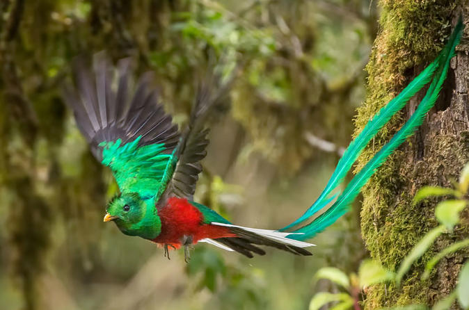 Bird watching tour in monteverde in monte verde 368499