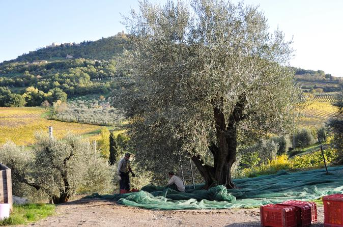 Tuscan Olive Oil Seminar