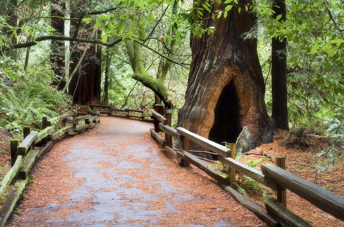 Super desconto para São Francisco: Muir Woods e Wine Country com almoço gourmet opcional