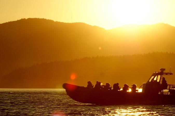 Summer Sunset Whales and Wildlife Tour in Vancouver Island