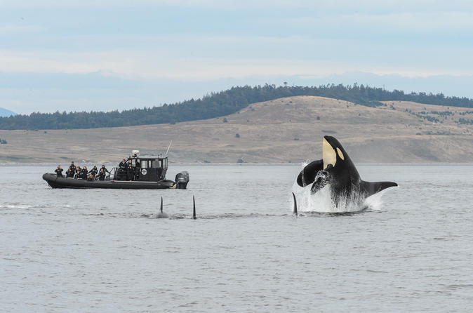 Summer Whale Watching on Vancouver Island
