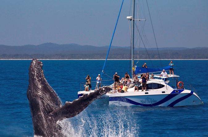 Hervey bay whale watching cruise by catamaran in hervey bay 299030