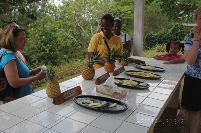 Croydon in the Mountains Pineapple Plantation tour from Montego Bay
