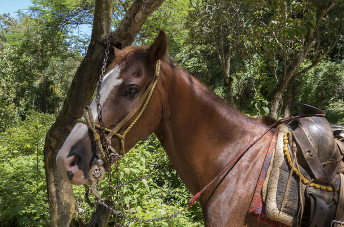 Rhodes hall horseback riding tour with snorkeling in negril 183000