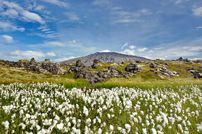 Snaefellsjokul Peninsula Day Trip from Reykjavik: Kirkjufell Mountain and Djúpalónssandur Beach