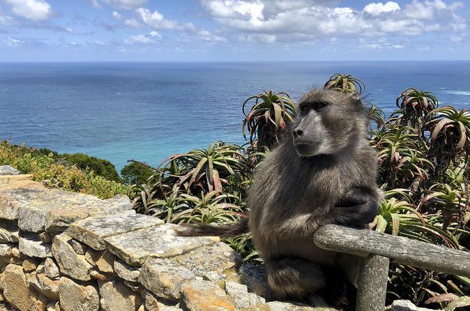 Excursão diurna guiada para Cape Point com pinguins e degustação de vinhos saindo da Cidade do Cabo