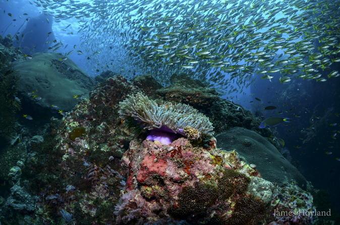 Full day diving in koh bida with 2 dives for certified divers in ko lanta yai 320187