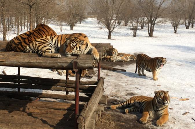 Private Half Day Tour to Siberian Tiger Park and Harbin Polarland with Entrance Fees