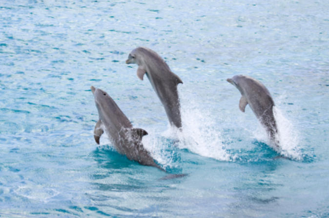 Half-Day Dolphin Island Tour from Punta Cana Dominican Republic, Central America