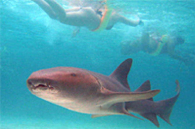Punta Cana Marinarium Shark and Ray Experience Dominican Republic, Caribbean