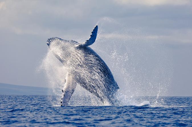 Samaná Whale-Watching Cruise and Tropical Island Visit