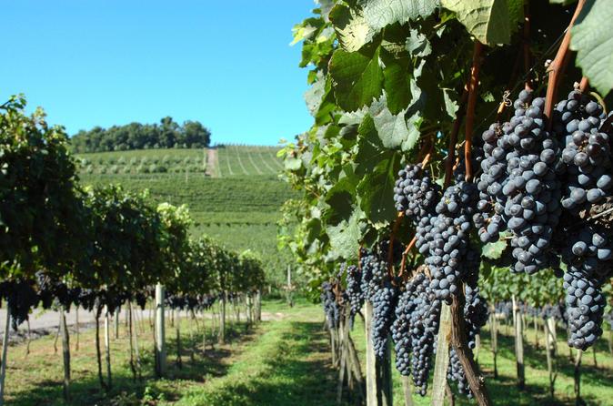 Excursão de degustação de vinho em Vale dos Vinhedos