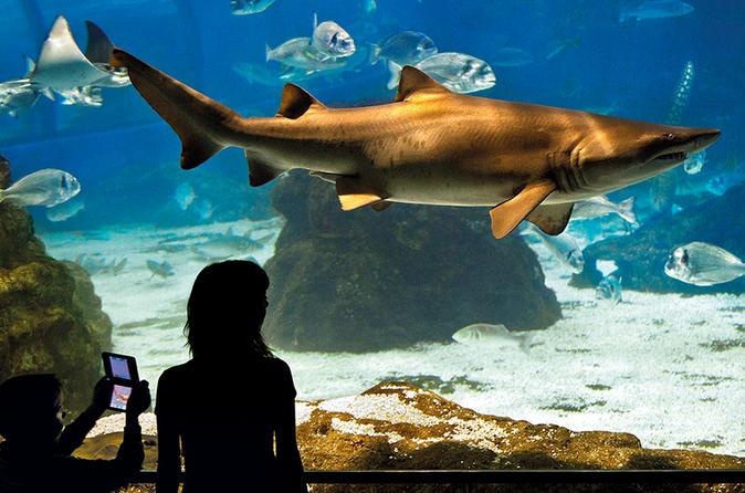 Barcelona Aquarium Skip the Line Ticket