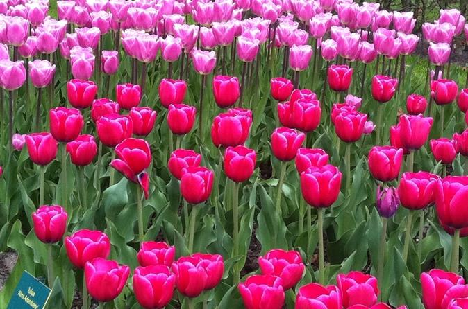 Excursi n por la costa de msterdam visita a los jardines de keukenhof y campos tulipanes - Jardines de tulipanes en holanda ...