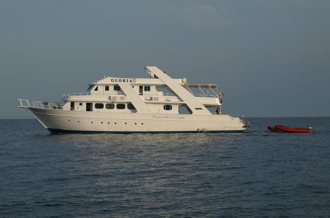 Dolphin spotting overnight cruise to sataya with scuba diving in marsa alam 304053