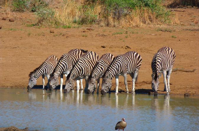 Pilanesberg Day Tour from Johannesburg or Pretoria