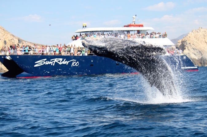 Whale Watching Dinner Cruise in Los Cabos