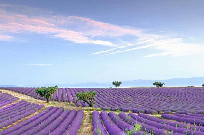 Dream Of Women Lavender Fields And Lunch In Provence - Cannes