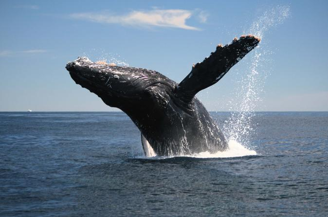 Samana Peninsula Whale Watching Cruise from Punta Cana