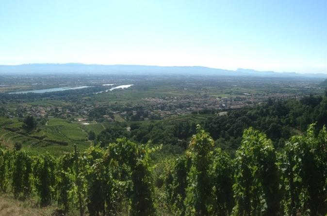 Half-Day Vienne Cote Rotie Wine Tour with Tasting from Lyon
