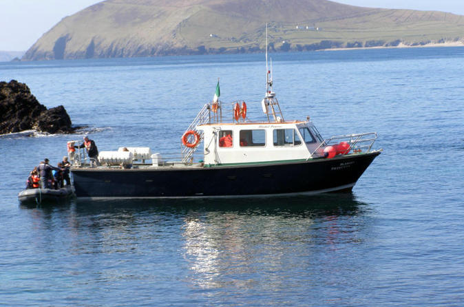 Dolphin and whale watching tour from dingle in dingle 279570