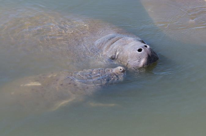 Manatee Kayaking Tour Along Florida's Indian River