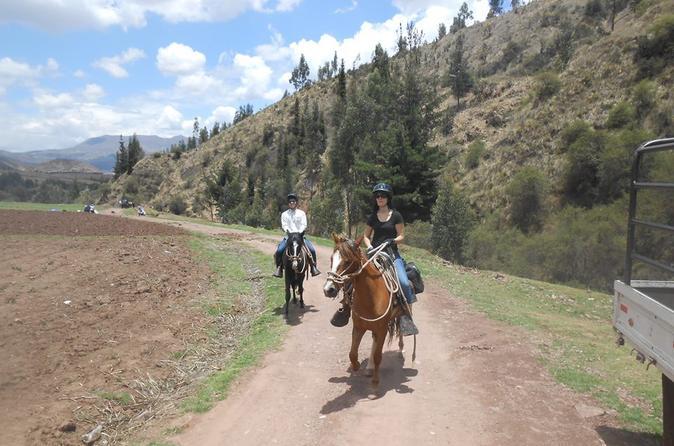 Passeio a cavalo em Cusco: conheça os cavalos Paso peruanos