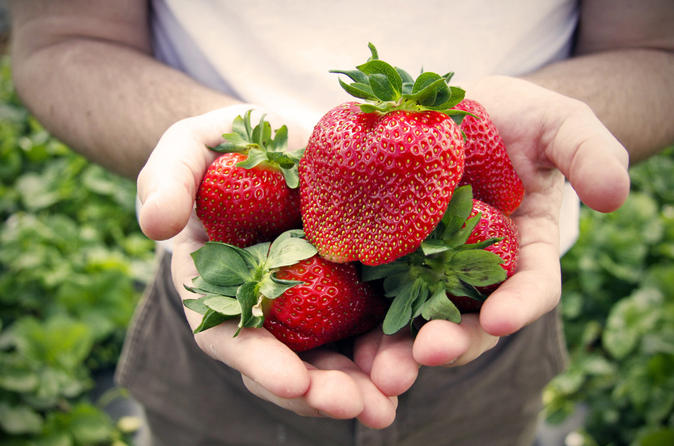 Private Full-Day Strawberry Picking and Beijing Aviation Museum Tour from Beijing