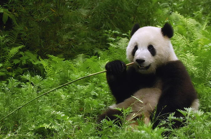 Private Half Day Tour to Beijing Panda House and Summer Palace