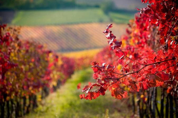 Livermore Half Day Wine Tour From San Francisco