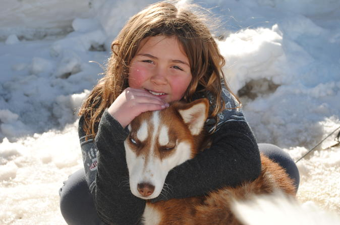 Half Day Tour of the San Juan Mountains by Dogsled