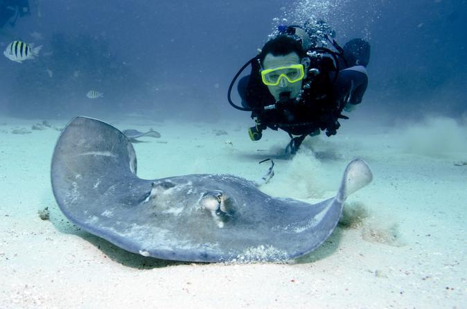 Grand Cayman Stingray City Dive