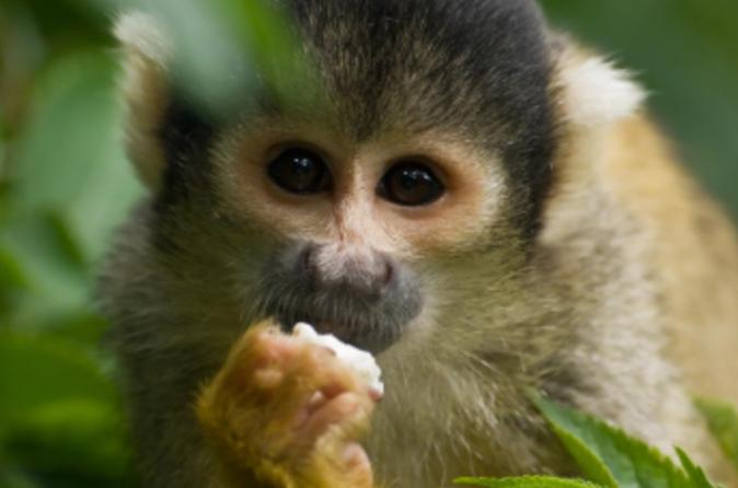Cruzeiro turístico no Lago Gatun e na Ilha dos Macacos da Cidade do Panamá