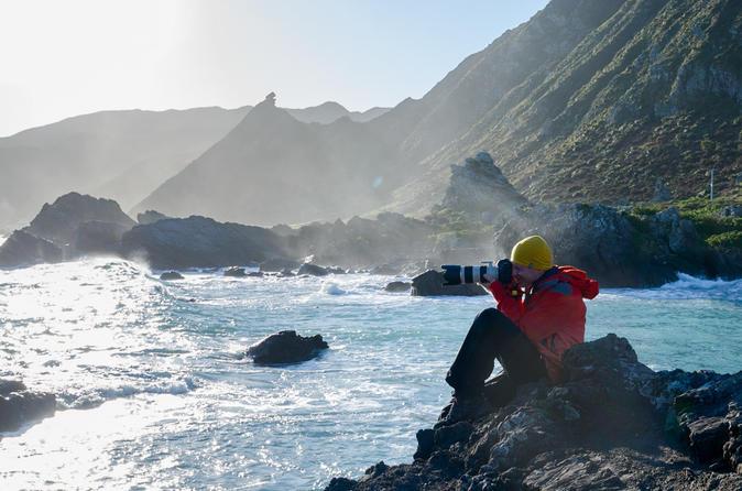 Private Shore Excursion: Wellington Photography Tour