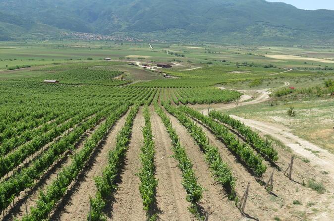 Wine tasting in villa yustina in plovdiv 279021
