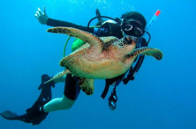 Scuba Diving for Certified 2-tank on the Leeward Coast